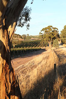 Taylors Vineyard - Clare Valley